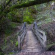 Bridge on Waterfall Trail at Garland Ranch Regional Park — Stock Photo