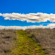Stock Photo: Green Path Leading to Horizon with White Puffy Clouds