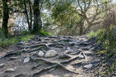 Rain Has Eroded the Trail, Leaving Rocks and Gnarled Tree Roots — Stock Photo