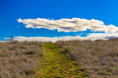 Green Path Leading to Horizon with White Puffy Clouds — Stock Photo