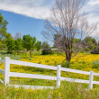 Spring Flowers in Fence Lined Pasture in Midwest Prairie — Stock Photo