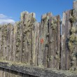 Stock Photo: Moss Covered Stockade Fence Background or Backdrop
