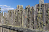 Moss Covered Stockade Fence Background or Backdrop — Stock Photo