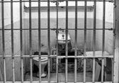 Prison Cell at Alcatraz Island Cell Block A — Stock Photo