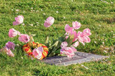 Flowers on Grave Marker at San Carlos Cemetery. — Stock Photo