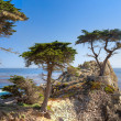 Stock Photo: Lone Cyprus Tree