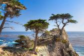 Lone Cyprus Tree — Stock Photo