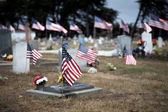 American Flags Honoring War Dead — Stock Photo