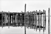 Weathered and Worn Pier at Bodega Bay — Stock Photo