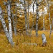 Birch Forest in Indian Summer — Stock Photo