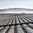 Agricultural Field Covered in Plastic Sheeting — Stock Photo #37959365