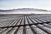 Agricultural Field Covered in Plastic Sheeting — Stock Photo