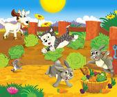 Animales en el campo de la lechuga — Foto de Stock