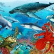 Coral reef — Stock Photo #12134026