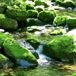 Moss-covered rocks in a river bed — Stock Photo