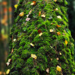 Trunk of a tree overgrown with moss. - Stock Photo