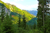 Hermoso bosque verde — Foto de Stock