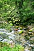 Vacker grön skog — Stockfoto
