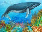 Las ballenas — Foto de Stock