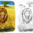 Safari - lions - coloring page - illustration for the children — Stock Photo