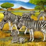 Safari - zebras - illustration for the children — Stock Photo #32338085
