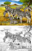Safari - zebras - coloring page - illustration for the children — Stock Photo