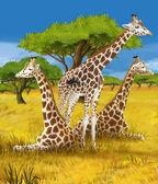 Safari - giraffes - illustration for the children — Stock Photo