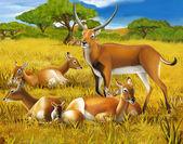 Safari - koba lychee — Stock Photo