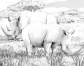 Safari - rhino — Photo