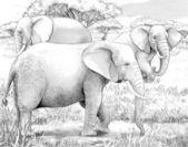 Safari - koba lychee — Stockfoto