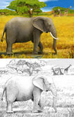 Safari - koba lychee — Photo