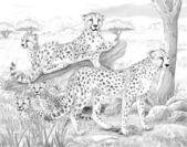 Safari — Stock fotografie
