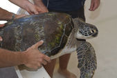 Turtle rehabiliteringscenter — Stockfoto