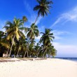 Tropical Beach — Stock Photo #13442869