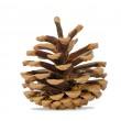 One revealed fir cone isolated on a white background — Stock Photo