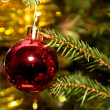 Red xmas ball hanging on pine twig — Stock Photo #12117733