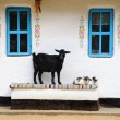 Stock Photo: Rural life scene. Goat and cat on bench.