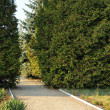 Footpath in decorative park - Stock Photo