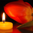 Romantic composition with a tulip and candle - Foto Stock