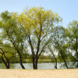 Green trees against the river — Stock Photo