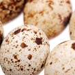 Photo of the quail egg — Stock Photo #12119596