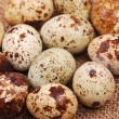 Photo of the quail egg — Stock Photo