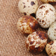 Photo of the quail egg — Stock Photo #12119621