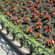 Red flower bed in park — ストック写真