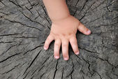 Children's hand is located on an old stump — Stock fotografie
