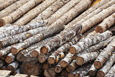 Stack of logs as background — Stock Photo