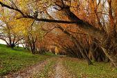 The sunset in autumn wood — Stock Photo