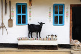 Rural life scene. Goat and a cat on the bench. — Stock Photo