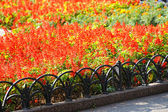 Bright flower bed in the park — Stock Photo