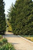 μονοπάτι στο πάρκο διακοσμητικά — Stockfoto